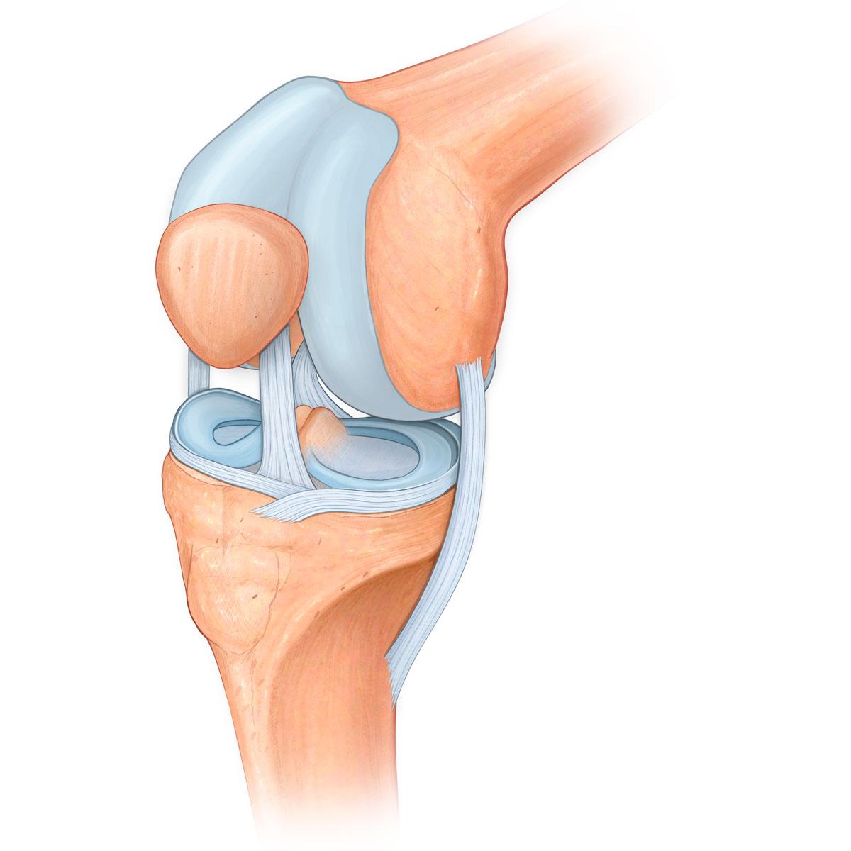 картинка колена человека половинок срезается нижняя